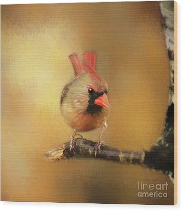 Wood Print featuring the photograph Female Cardinal Excited For Spring by Darren Fisher