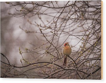 Wood Print featuring the photograph Female Cardinal In Spring 2017 by Terry DeLuco