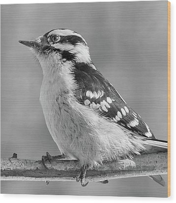 Wood Print featuring the photograph Female Downy Woodpecker In Winter by Jim Hughes