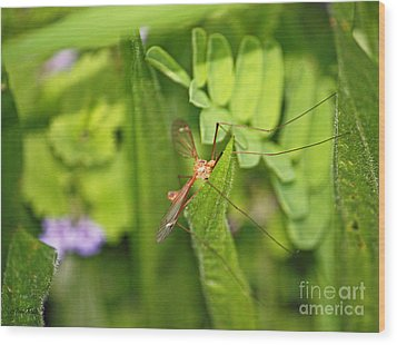 Female Mosquito Wood Print