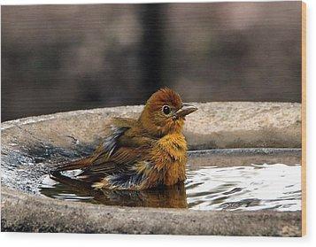 Female Summer Tanager In Bird Bath Wood Print