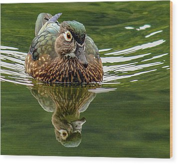 Wood Print featuring the photograph Female Wood Duck by Jean Noren