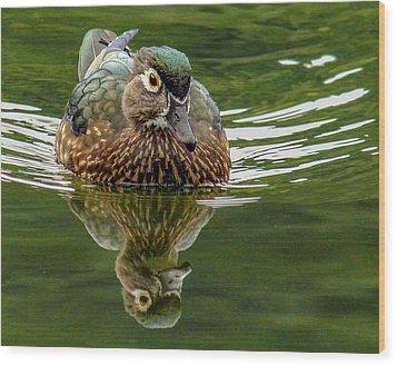 Female Wood Duck Wood Print by Jean Noren