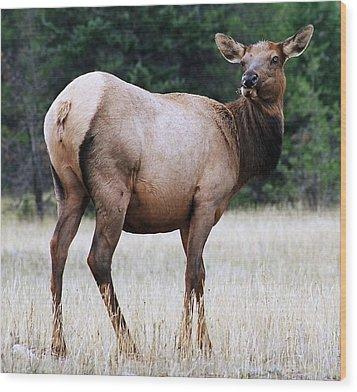Feme Elk Wood Print by Tiffany Vest