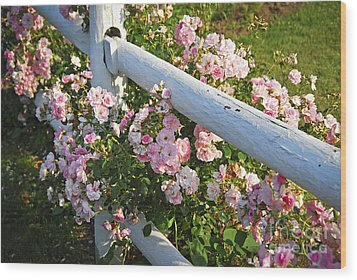 Fence With Pink Roses Wood Print by Elena Elisseeva