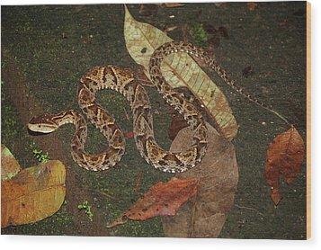 Wood Print featuring the photograph Fer-de-lance, Bothrops Asper by Breck Bartholomew