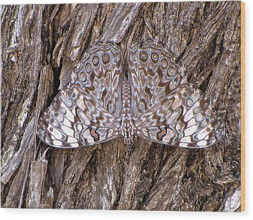 Ferentina Calico Butterfly Wood Print by Sean Griffin