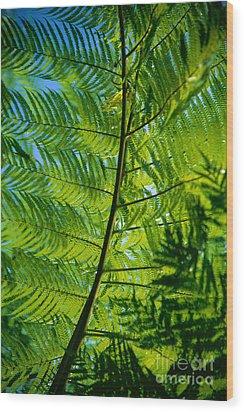 Fern Detail Wood Print by Himani - Printscapes