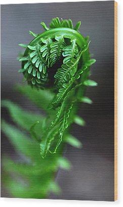 Fern Frond Wood Print