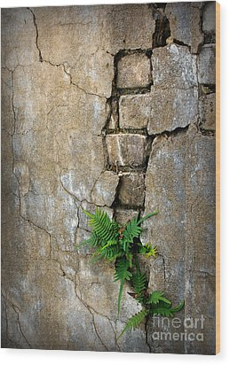 Fern Life Wood Print by Perry Webster