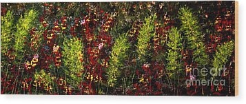 Ferns And Berries Wood Print by Tim Townsend