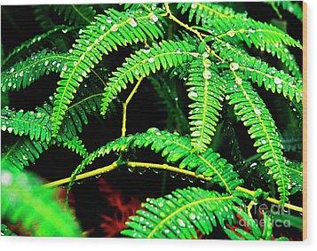 Ferns And Raindrops Wood Print by Thomas R Fletcher