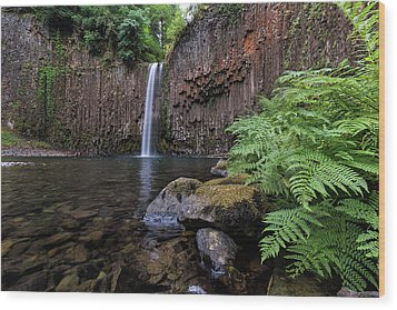 Ferns And Rocks By Abiqua Falls Wood Print by David Gn