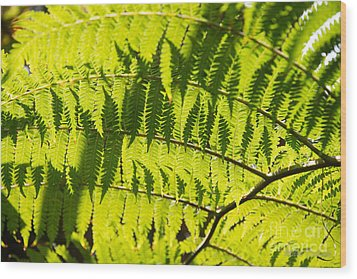 Ferns In Sunlight Wood Print