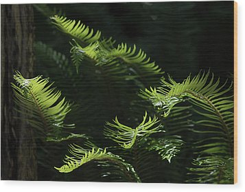 Ferns In The Forest Wood Print