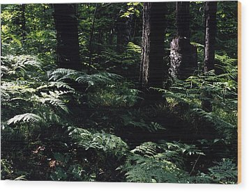 Wood Print featuring the photograph Ferns In The Forest Wc by Lyle Crump