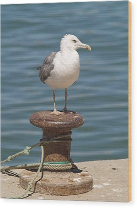 Ferragudo Seagull At Rest Wood Print by Michael Canning