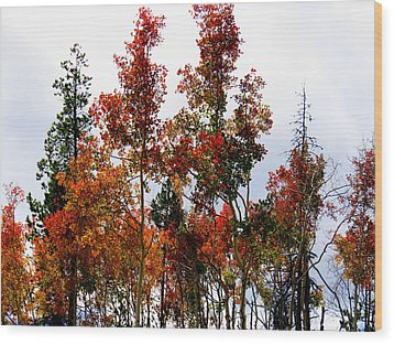 Festive Fall Wood Print by Karen Shackles