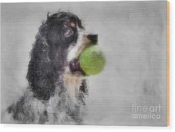Wood Print featuring the photograph Fetching Cocker Spaniel  by Benanne Stiens