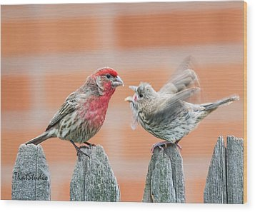 Feuding Finches Wood Print
