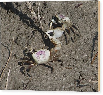 Fiddler Crabs Fighting 2 Wood Print