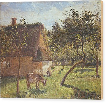 Field At Varengeville Wood Print by Camille Pissarro