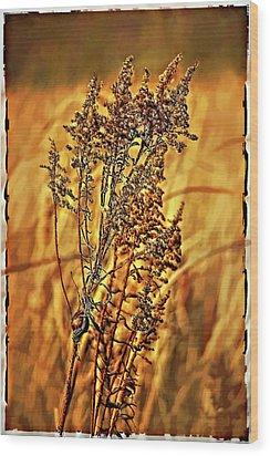 Field Frolic Wood Print by Steve Harrington