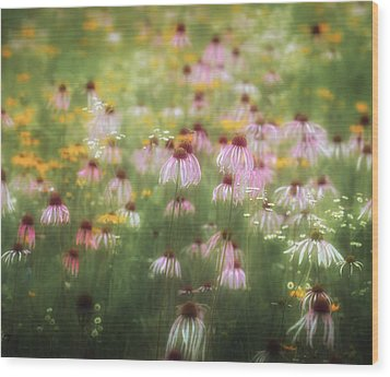Field Of Coneflowers 5x6 Wood Print by James Barber