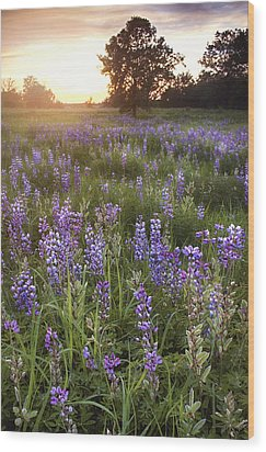 Field Of Dreams Wood Print