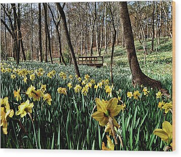 Field Of Daffodils Wood Print