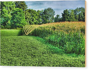 Field Of Dreams Iv Wood Print by Steven Ainsworth