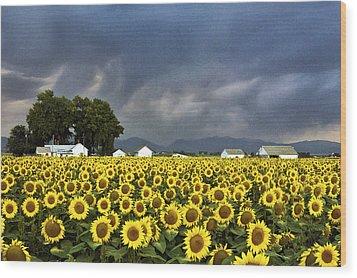 Field Of Flowers  Wood Print by James Steele