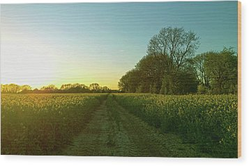 Wood Print featuring the photograph Field Of Gold by Anne Kotan