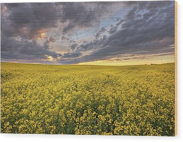 Wood Print featuring the photograph Field Of Gold by Dan Jurak