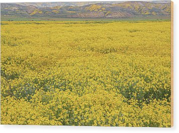 Wood Print featuring the photograph Field Of Goldfields by Marc Crumpler