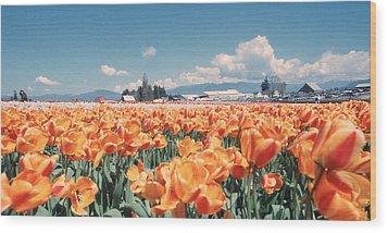 Field Of Orange Wood Print
