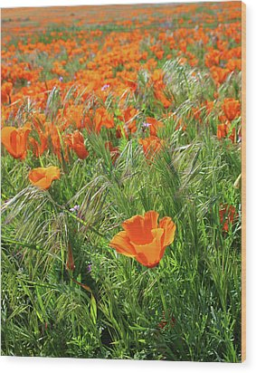 Wood Print featuring the mixed media Field Of Orange Poppies- Art By Linda Woods by Linda Woods