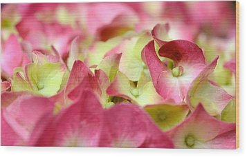 Wood Print featuring the photograph Field Of Petals by Corinne Rhode