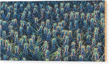 Field Of Pineapples Wood Print
