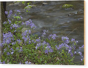 Wood Print featuring the photograph Field Of Purple 3206 by Peter Skiba
