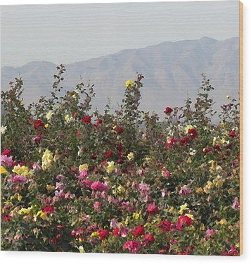 Wood Print featuring the photograph Field Of Roses by Laurel Powell