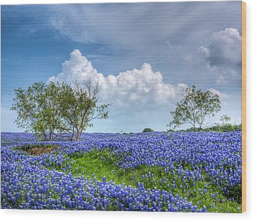 Field Of Texas Bluebonnets Wood Print by David and Carol Kelly