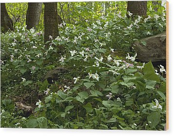 Wood Print featuring the photograph Field Of Trillium 2833 by Peter Skiba
