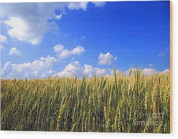 Field Of Wheat  Wood Print by Sandra Cunningham
