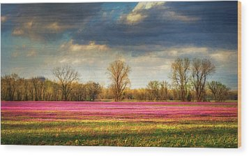 Fields Of Clover Wood Print by James Barber