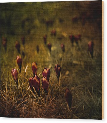 Fields Of Elegance Wood Print by Loriental Photography
