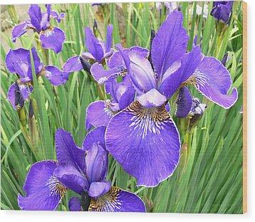 Fields Of Purple Japanese Irises Wood Print by Jennie Marie Schell