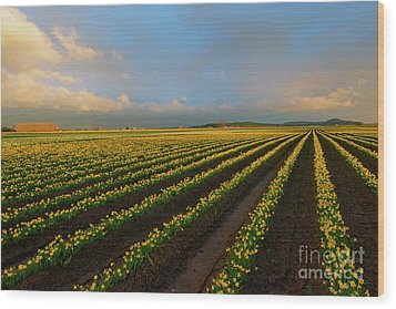 Wood Print featuring the photograph Fields Of Yellow by Mike Dawson
