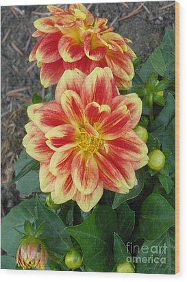 Fiery Dahlia Wood Print