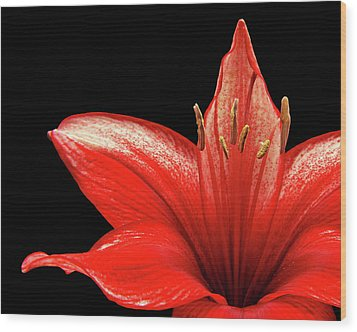 Wood Print featuring the photograph Fiery Red by Judy Vincent